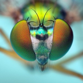 Zygote Quarterly 2: biomimética, productos inspirados en la naturaleza