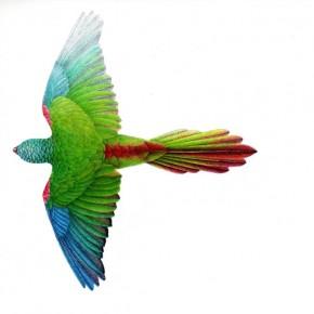 El vuelo de las aves: ingeniería en la naturaleza