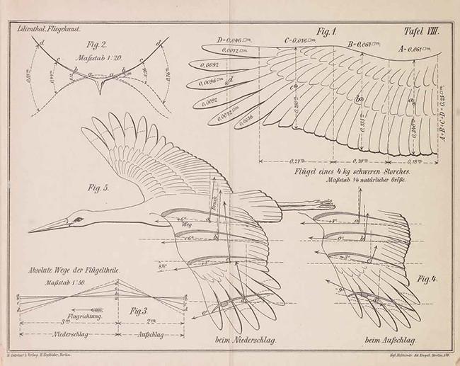 2aOtto Lilienthal, Der Vogelflug als Grundlage der Fliegekunst, [Bird flight as the basis of the art of flying] Berlin, 1889, Gift of the Burndy Library.